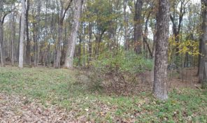 Value-Priced Robinson Pond Lots
