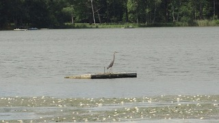 7 - Heron on Dock