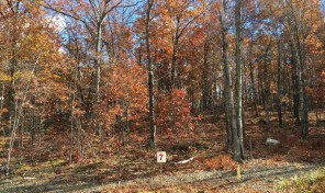 Lot with Colorful Hardwoods